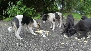 stray puppies augustHD 2019
