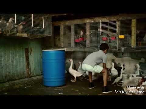 Gall Goriye- Officials music video |...