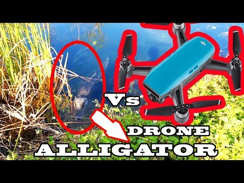 Drone Vs Alligator at Everglades | Epic 5 Minute video