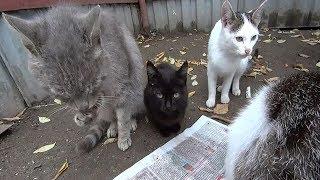 бездомные кошки котята и коты они нуждаются в нашей защите