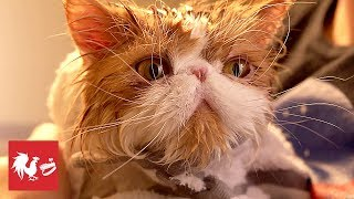 Pets Love Quarantine | RT Life