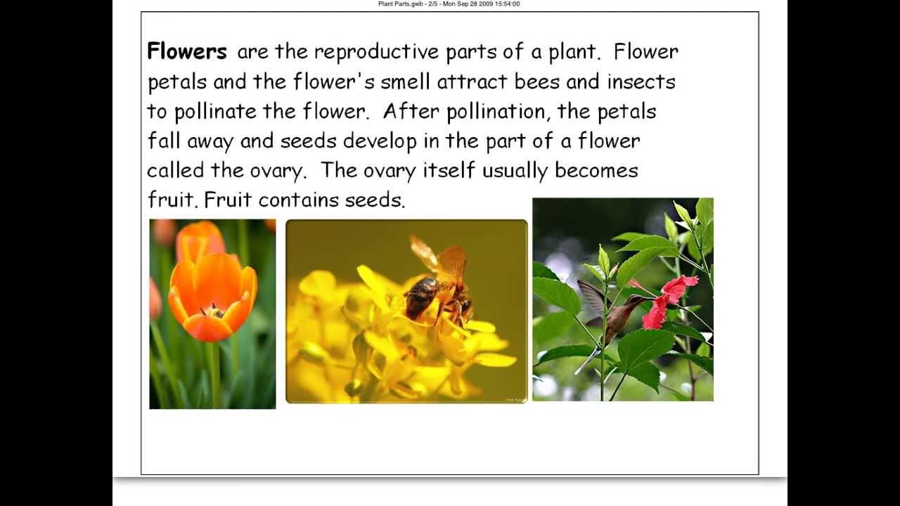 Plant Parts and their Functions (4th) - YouTube