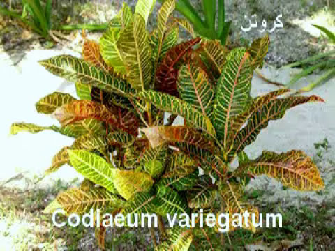 Decorative Plants For Home Names Of Ornamental Plants Youtube