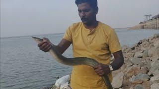 hyderabad village fishing#big baam fish# #catching #in  singur dam  .
