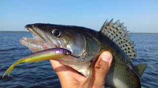 Ловля судака на оснастку дроп-шот. Удачная рыбалка на Киевском море