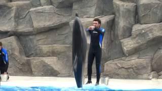 Грузия (Georgia). Батуми. Шоу дельфинов.