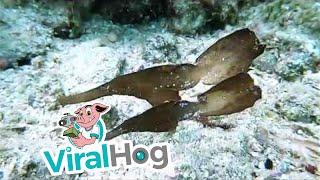 Ghost Fish Synchronized Dance || ViralHog