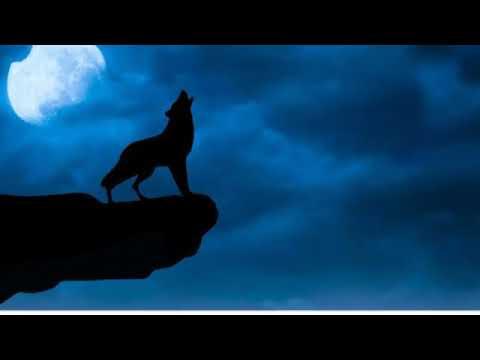 Lirik Lagu Akulah Serigala GGS