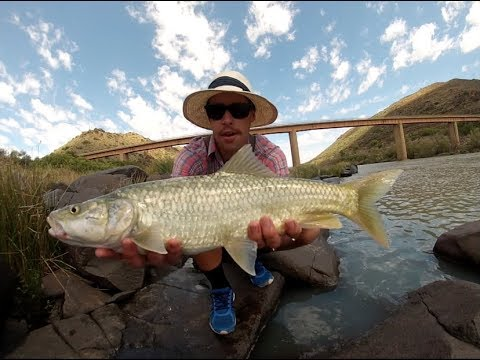 Is This The 'ULTIMATE' Freshwater Fish (Large Mouth Yellow) | Orange River Pt 3 | Fishing Ep 7