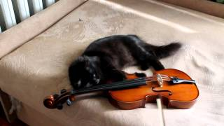 Кошка играет на скрипке(Это видео участвует в конкурсе