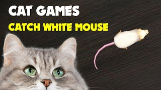 CAT GAMES Mouse hunt 1 hour Catching white mouse
