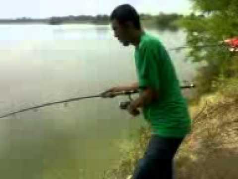 ปลาดุกตกฉะโด