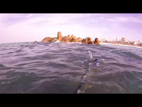 Shallow water Seabass spearfishing with roballen caranx 90, Alexandria Egypt