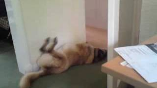 my dog running in his sleep lol r.i.p