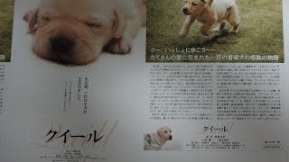 クイール A 2004 映画チラシ 2004年3月13日公開 【映画鑑賞&グッズ探求...
