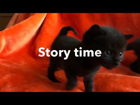Story time cat born with a curly tail
