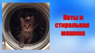Коты и стиральные машины