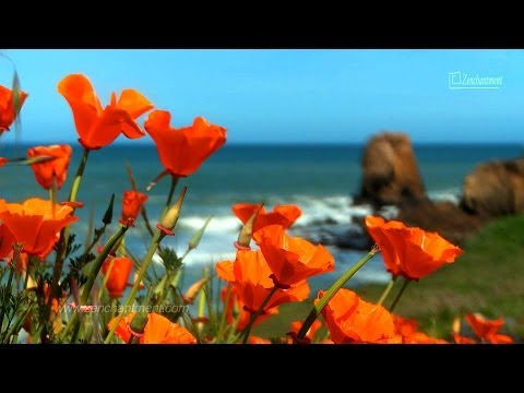 Zen Ocean Waves & Wild Flowers - California's Coast - Relaxation, Meditation, Mindfulness