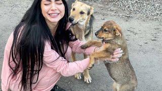 Бездомные щенки НАПАЛИ на Леру Кормим Бездомных Собак и Кошек