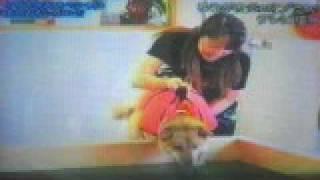 かいが2歳の時に『スームイン・ハプニング集』に放送された動画です.