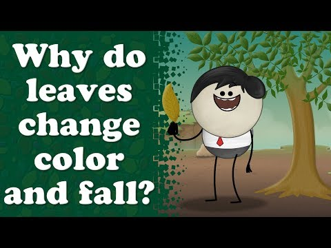 Why do leaves turn yellow? | #aumsum #kids #education #science #learn
