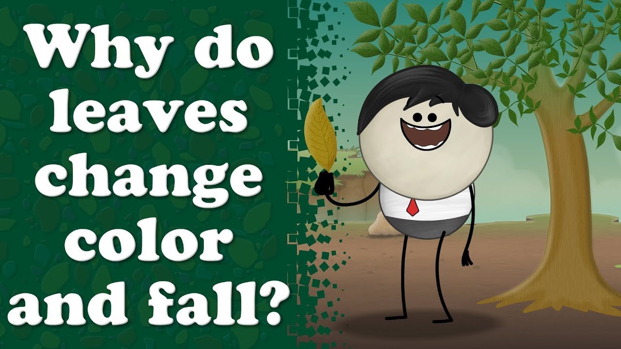 Why do leaves turn yellow? + more videos | #aumsum #kids #science #education #whatif