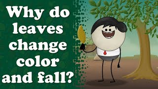 Why do leaves turn yellow? | #aumsum