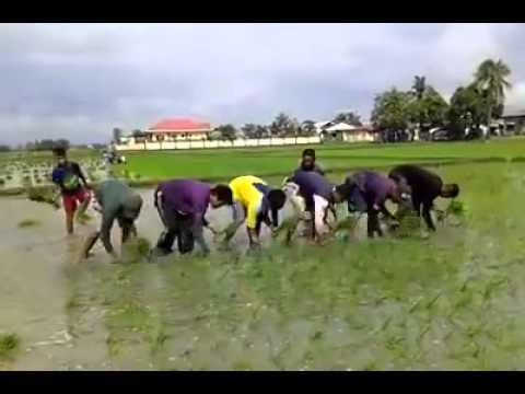Planting the rice LIKE Machine