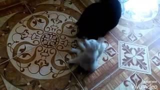 Two cats home. Два кота дома - это весело