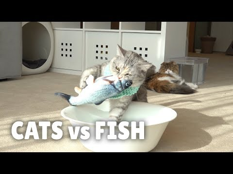 Cats Vs Fish | Kittisaurus