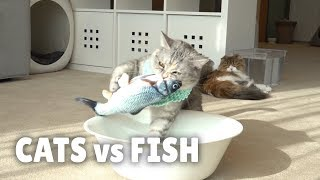 Cats vs Fish