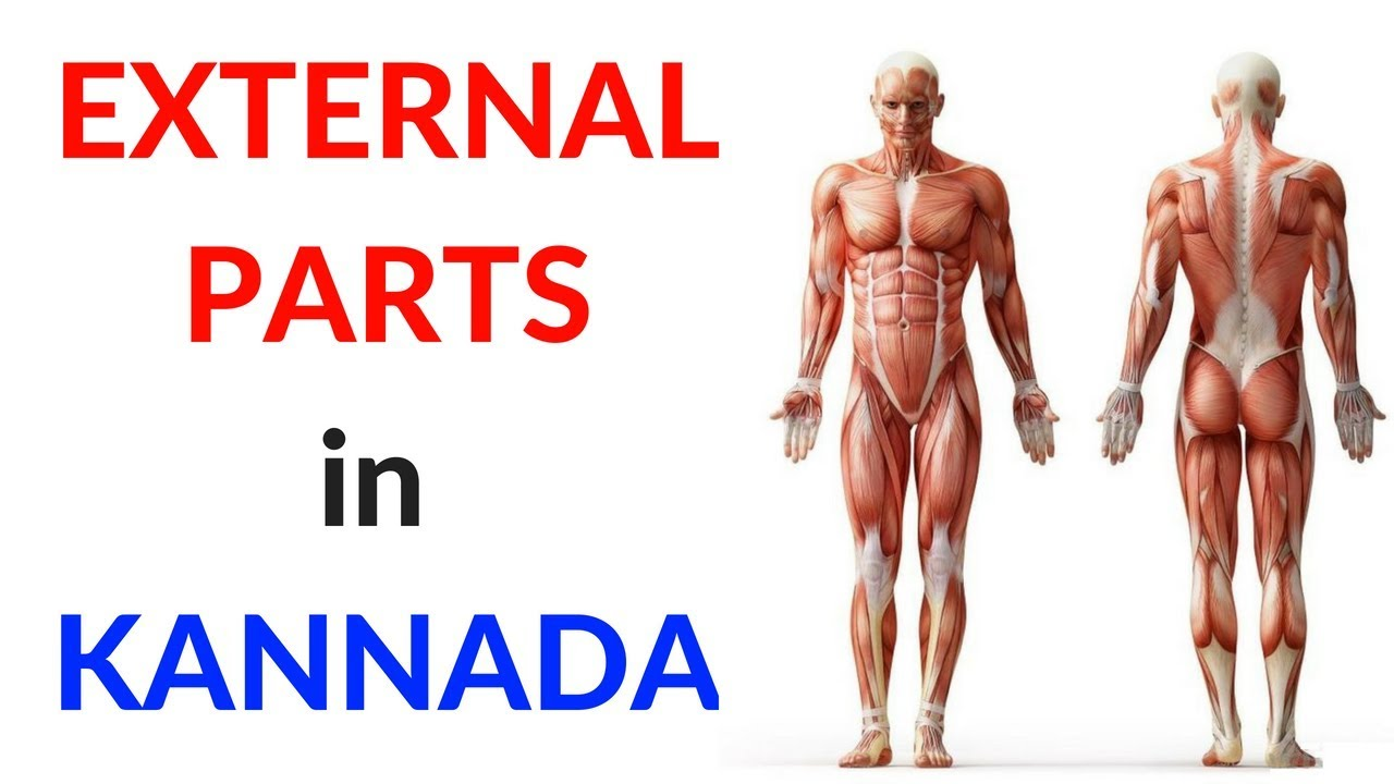Parts Of The Body In Kannada External Parts Learn Kannada Youtube