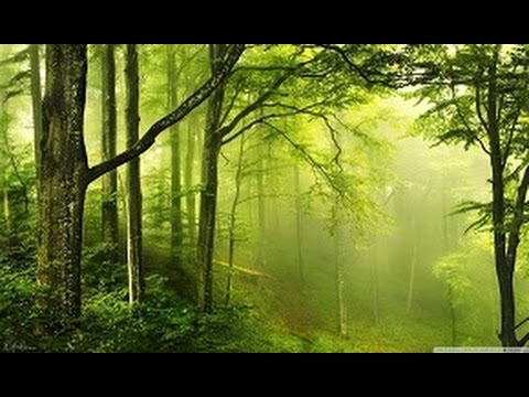 Vương quốc rừng xanh - Kingdom Of The Forest