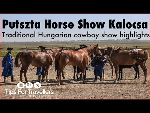 Hungarian Puszta Horse Show Kalocsa Hungary Highlights
