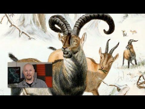 Extinct Animals Brought Back to LIFE?!