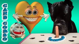 Собака Кане Корсо и хитрая колбаса сосиска. #canecorso #dogs #канекорсо