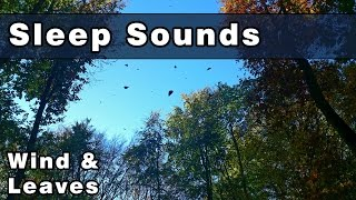 Restful SLEEP SOUNDS: Wind Sounds, White Noise Wind, Leaves Blowing, Rustling Leaves, 10 Hours