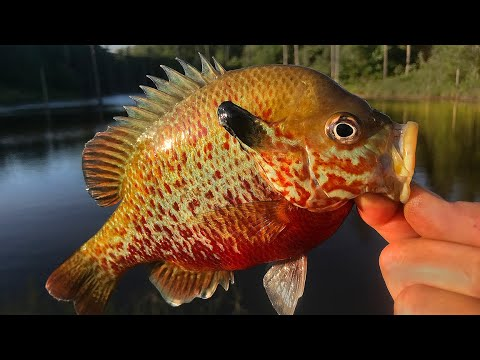 Fishing A Secluded Pond For Bluegill & Bream