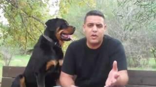 איך מדברים עם כלבים ? טיפ הכרחי