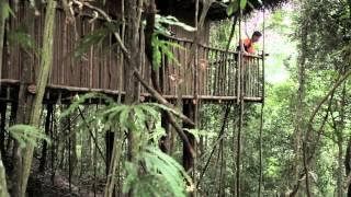 Tree Houses In Gunung Pulai, Malaysia