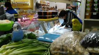 Волнистые попугайчики на продуктовом рынке