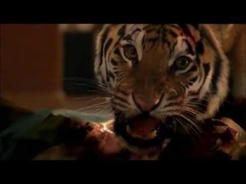 Музыка из фильма во власти тигра