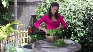 How to Harvest Lettuce Leaves : The Chef's Garden