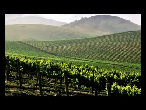 Wine Drinkers Beware: Monsanto's Glyphosate Found In California Wines, Even the Organic
