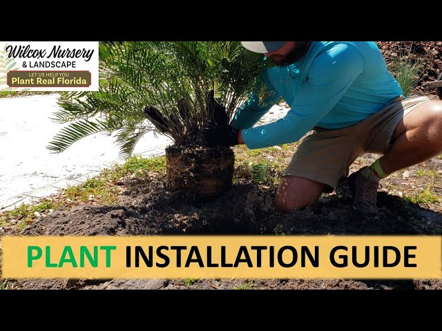 How to Plant a Plant: Installation Guide!