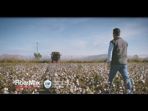 FiberMax®: A global brand for BASF in cotton seeds, a reference for the  cotton industry