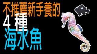 『水族系列 ep02』水族教學 | 不推薦新手養的4種海水魚『CC字幕』