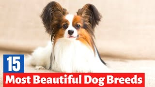 The 15 Most Beautiful Dog Breeds in the World  ( Must Watch for every Dog Owner )