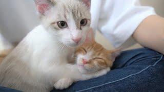 卒業前に一緒に思い出作りをする子猫たち【保護子猫】