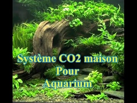 Syst me co2 maison pour aquarium youtube for Racine pour aquarium